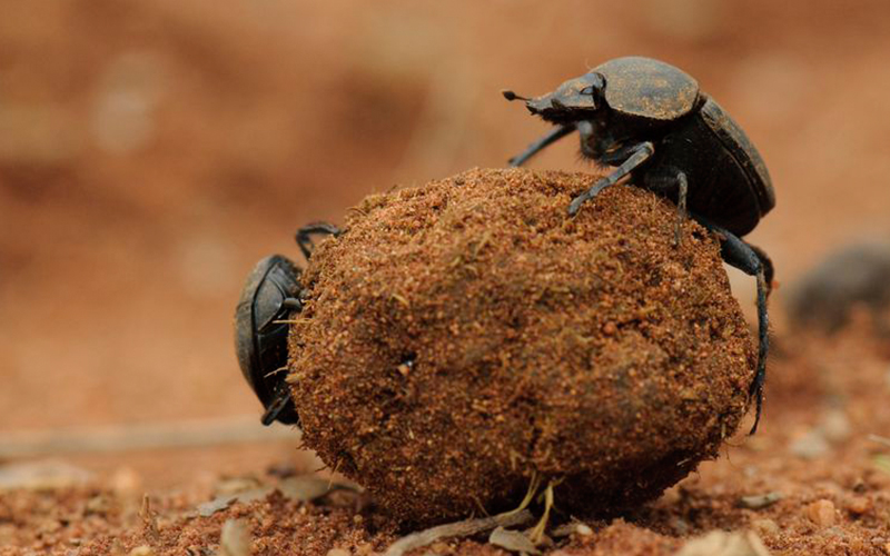 Most survival animals in the world