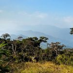 Trip to pettigala