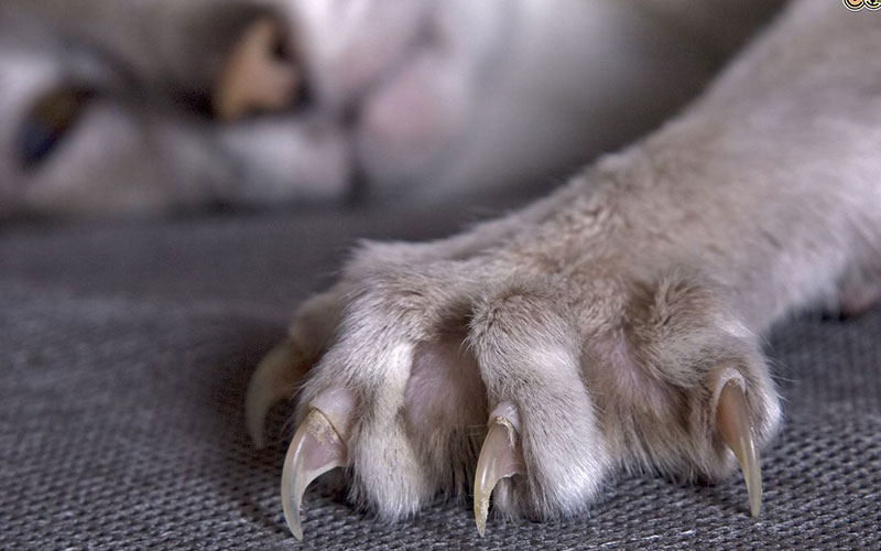 You are a cat if you have these