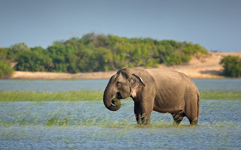 best places to capture wildlife photography